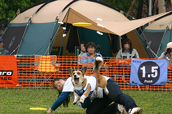2008042713